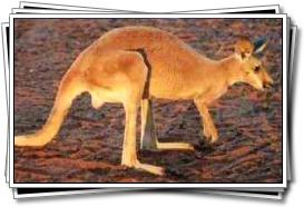 The unique wildlife of the outback